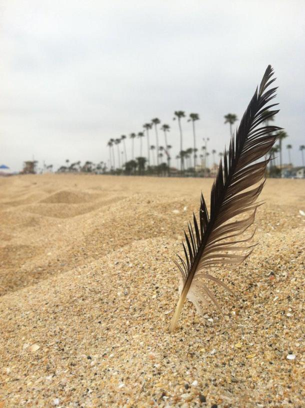 Mangled feather, or beautiful weather?